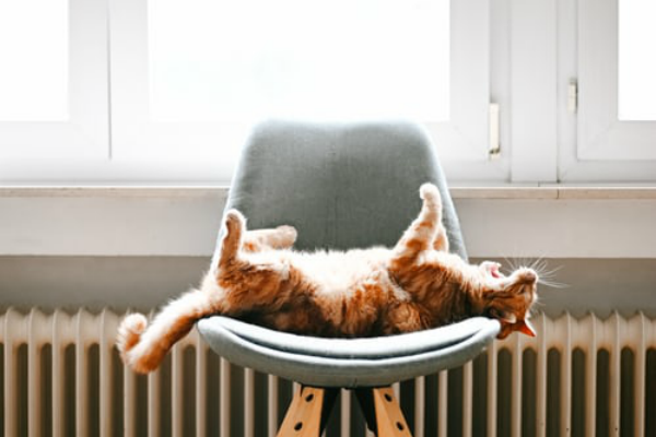 Cat on a chair by the radiator